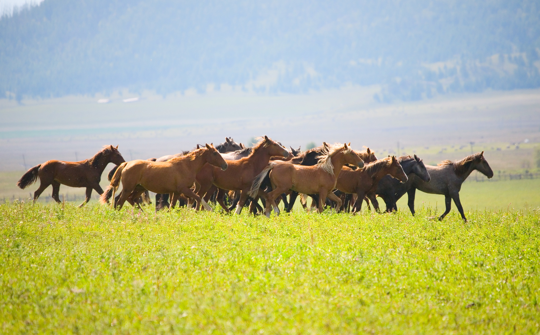 A herd of young horses on green pasture