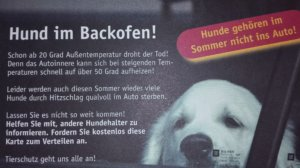 Hund im Backofen